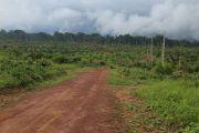 La RDC peine à protéger sa forêt tropicale, vitale pour le climat
