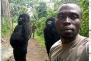 RDC : un garde forestier tué quelques jours après les selfies d'un collègue avec des gorilles dans un parc voisin