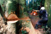 Ex-Katanga : Le gouvernement lève la suspension des activités d'exploitation forestière