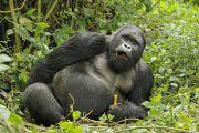 Shabunda: des leaders locaux sensibilisés sur la protection des espèces du parc de Kahuzi Biega
