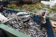 Production des poissons : le lac Tanganyika sous-exploité par la RDC