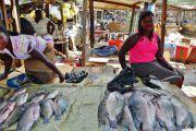 La RDC interdit l'importation et la commercialisation des tilapias