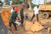 Un complément du cadre juridique sur la foresterie communautaire en RDC recommandé