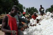 Relance imminente de la filière coton en RDC