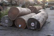 Interdiction de l'abattage des arbres dans le parc national des Virunga/Secteur Nord
