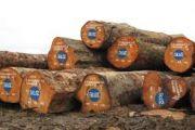 La RDC, paradis du commerce illégal du bois ?