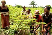 Le gouvernement à la recherche des moyens pour assurer la sécurité alimentaire de la  population