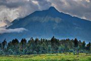 Pétrole dans les Virunga : WWF appelle à ne pas « mettre en péril » le parc