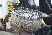 Inauguration d'une pêcherie moderne pour la ville de Goma