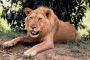 Kinshasa: un forum des magistrats pour lutter contre les crimes liés à la faune